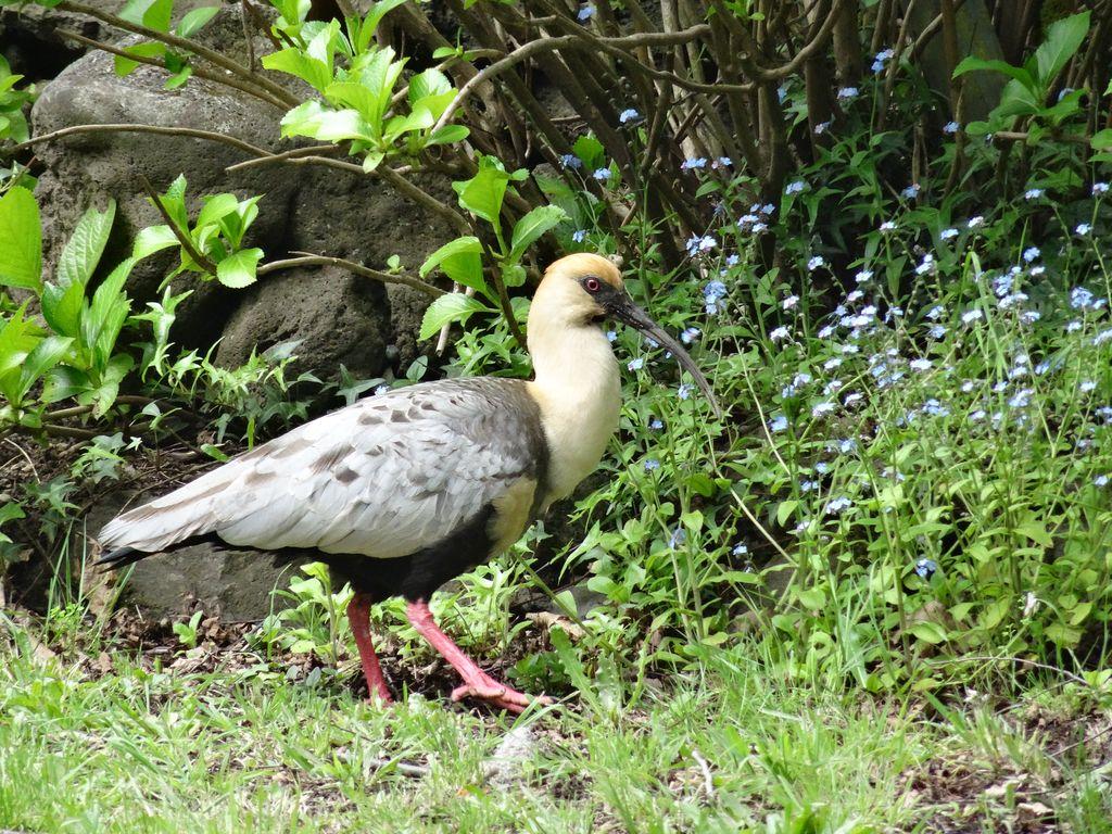 Et ses con'd'ibis préférés