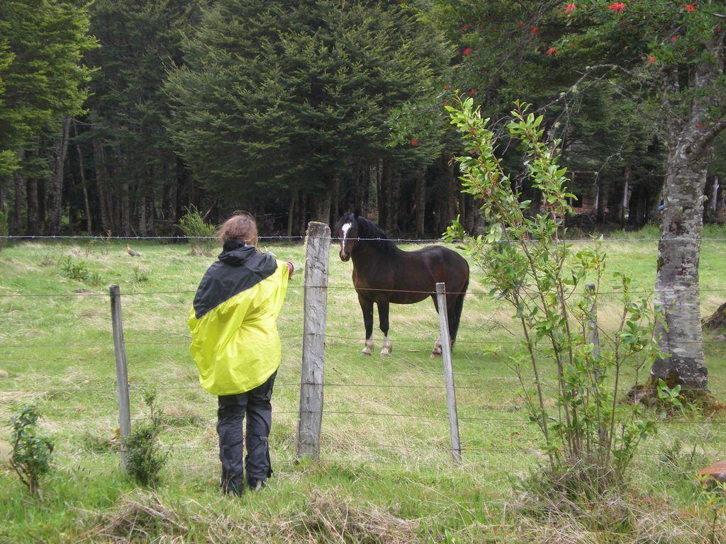 Les chevaux ne sont pas très sensibles...