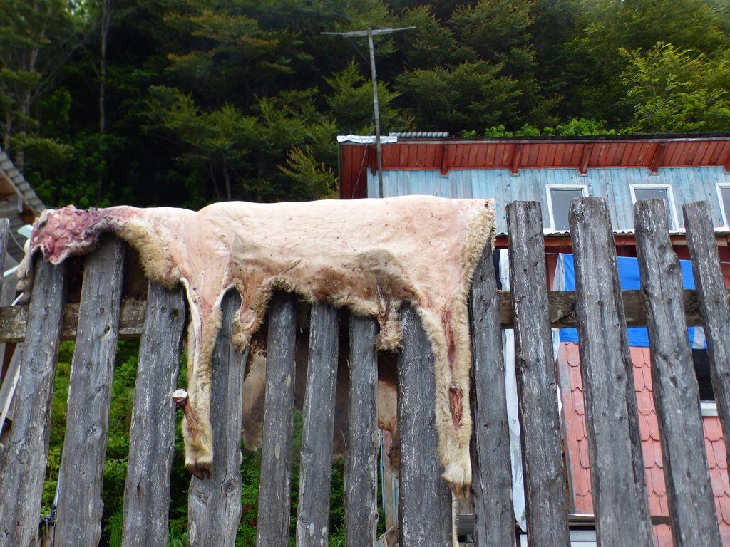 Epoque des corderos al palo