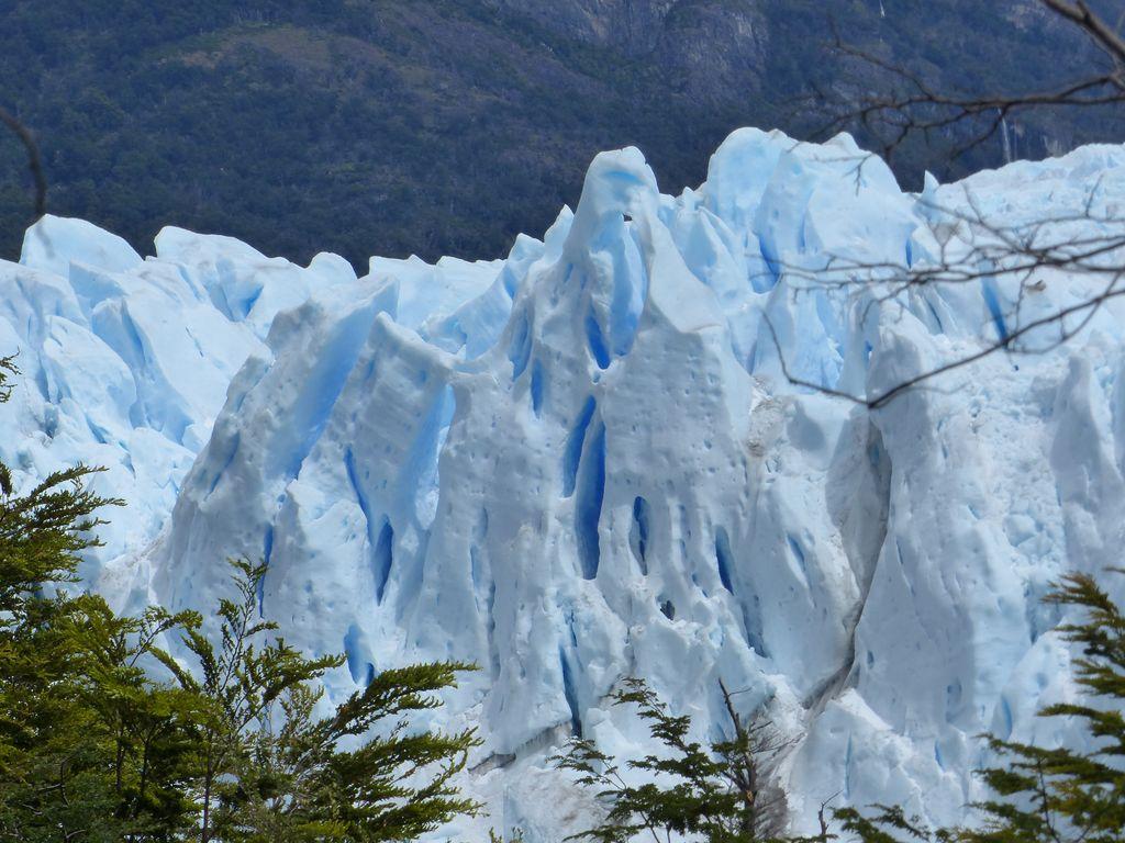 Les tours de glace qui jaillissent d'entre la végétation