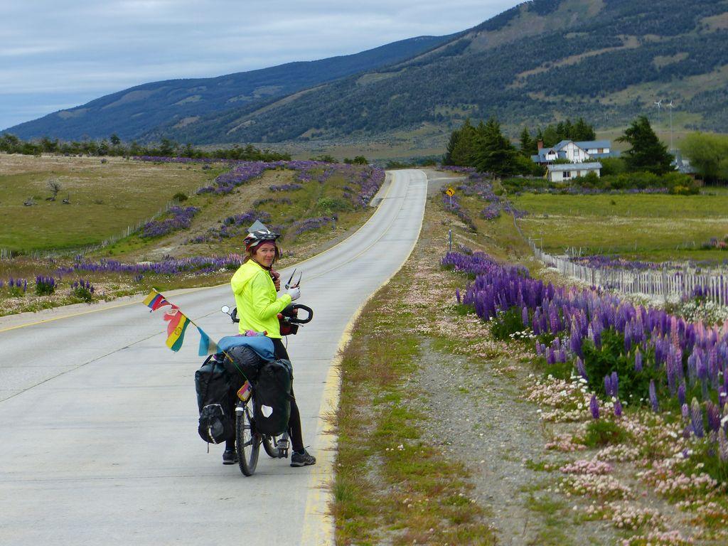 Sur la route pour Puerto Natales, on retrouve la végétation de la Patagonie. Lupins et Lengas