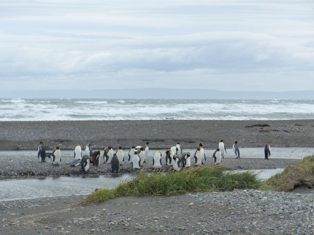 Première colonie posée à l'embouchure d'un cours d'eau sur la Baie Inutile