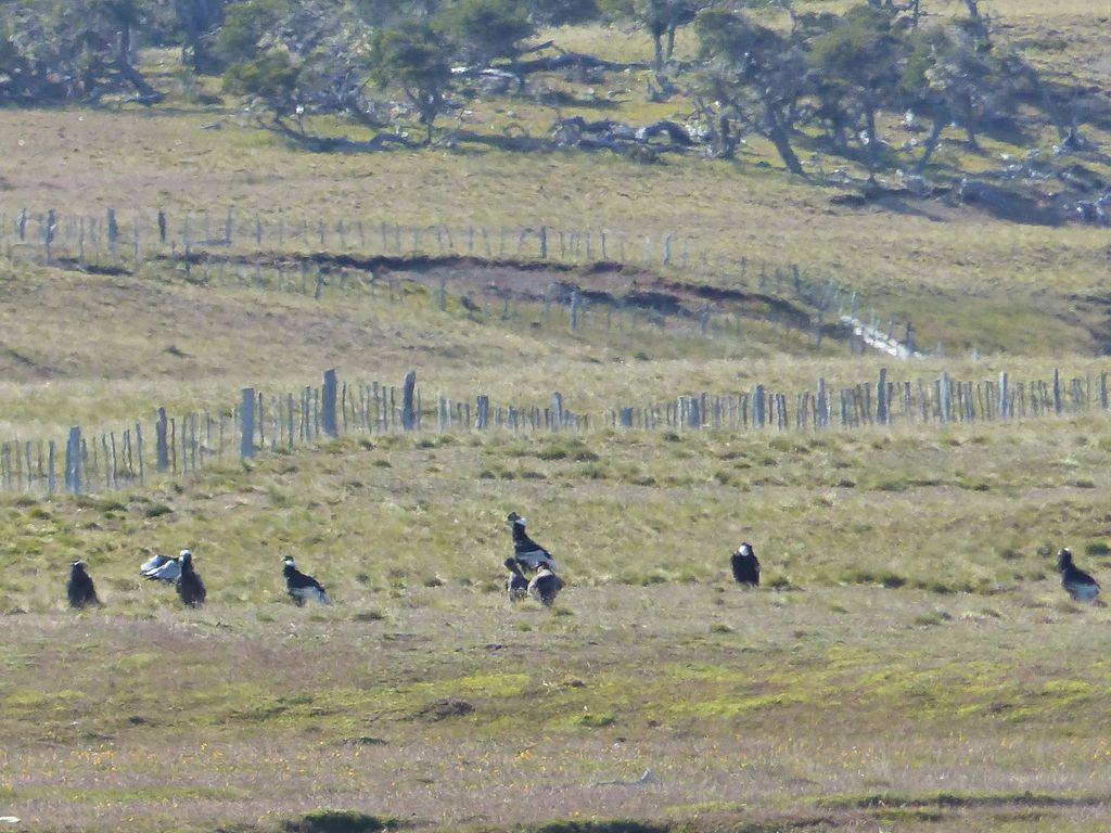 Grande famille de condors