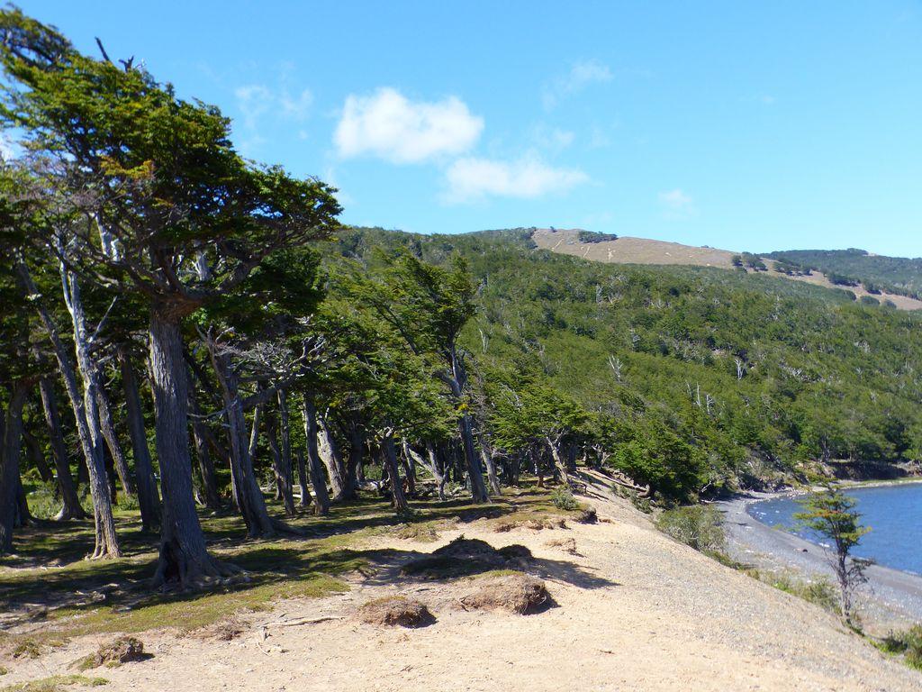 Forêt peignée par le vent