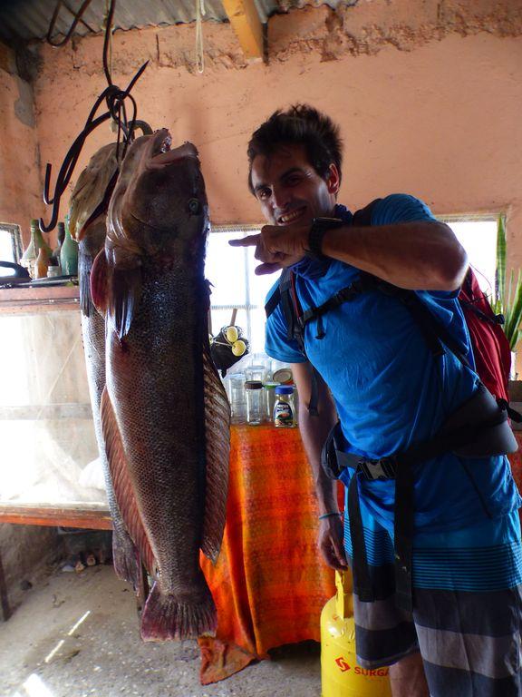 Salmon blanco fraîchement pêchés
